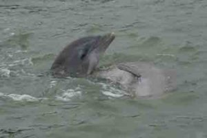 Dolphin Encounters of a Third Kind